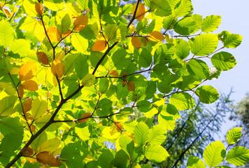 sonniger Herbstanfang