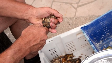 man opening an oyster