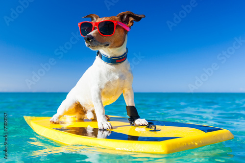 Leinwanddruck Bild surfer dog