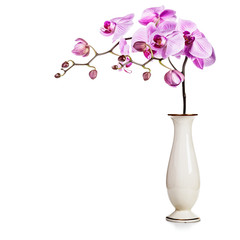 Orchid in vase