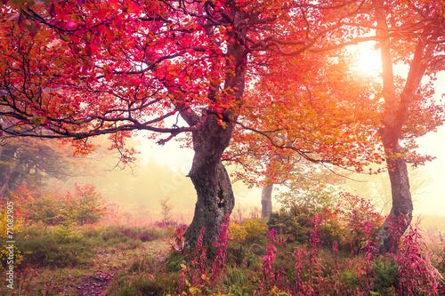 autumn forest © Leonid Tit