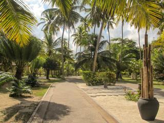 palmier seychelles