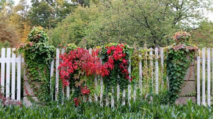 Herbstliche Blätter am Lattenzaun