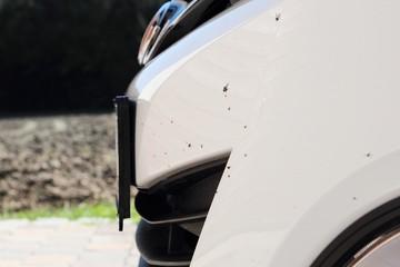 Mücken und Insekten an Spoiler von Auto