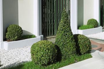 buis boule dans un espace vert urbain