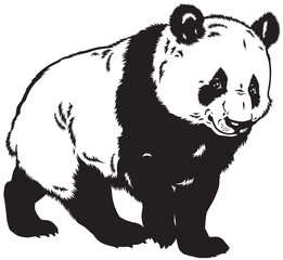 panda black and white
