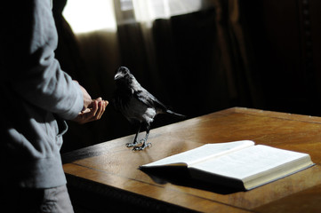 Crow on the desk