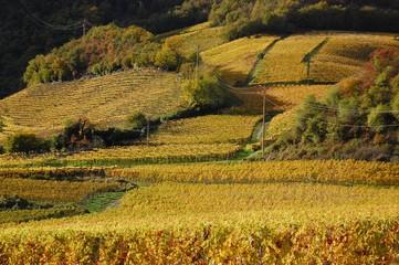 Vigne sulla Strada del Vino presso Caldaro