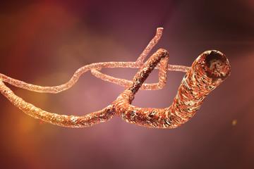 3D Microscopic Ebola Virus