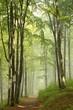 Trail through misty autumn forest in the sunshine
