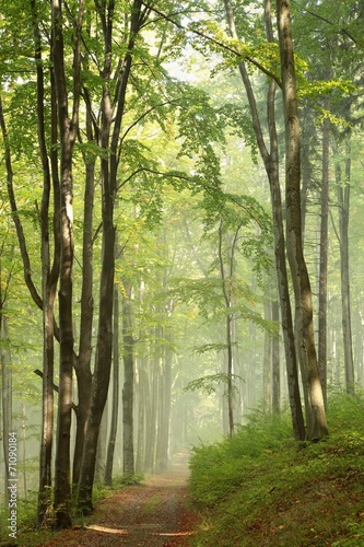 Fototapeta Trail through misty autumn forest in the sunshine