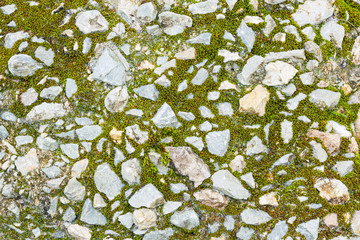 Moss and stone