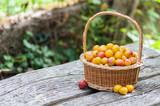 Mirabelles plums - 71091150