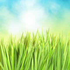 Green grass with sunny bokeh