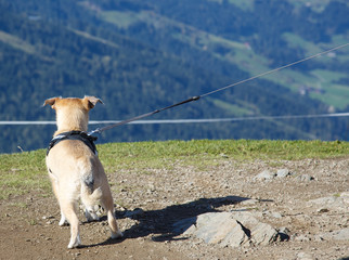 Bergsteigerhund