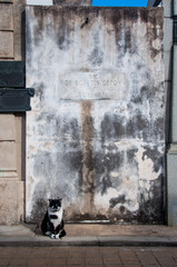 Black and white cat guarding the tomb in Recoleta's cemetery, Ar