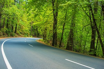 Scenic Forest Road