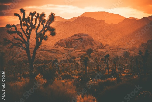 In de dag Baksteen Joshua Trees California Desert
