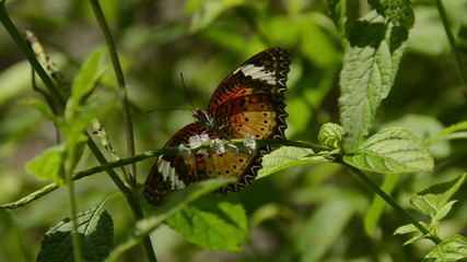 Exotic butterfly closeup view