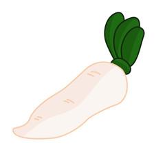 White radish isolated illustration