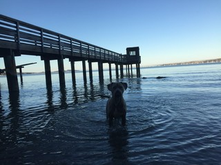 dog in the water 2