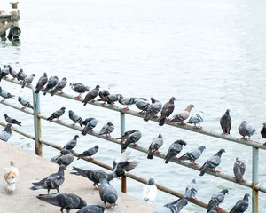 group of pigeon at pier in city