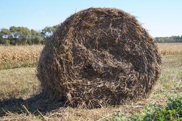 Тюк соломы круглой формы лежит на поле