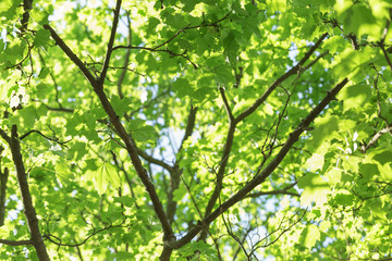 low angle photo of maple tree