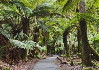 Tasmania Mt Field Disabled fern trees