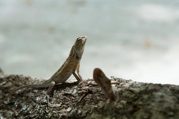 Close up of lizard