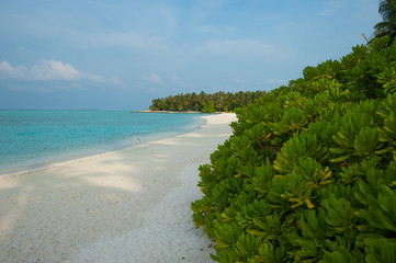 White sand on the beach, Green trees and blue ocean