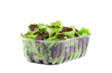 Plastic box full of lettuce salad.