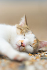 寝顔の野良猫