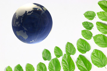 地球儀と新緑の葉