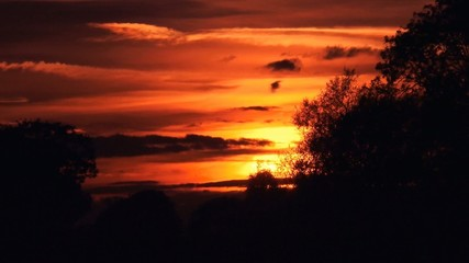 Attractive Sunset with silhouette of trees in foreground