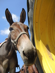 cavallo curioso