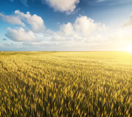 Field and sky. Beautiful natural landscape