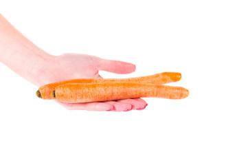 Hand holding ripe carrots.
