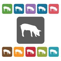 Year Of The Pig Icon. Zodiac Symbol Sign Icons Set. Rectangle Co