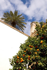 Cordoba - Andalusien - Spanien
