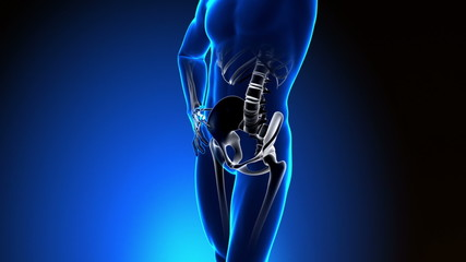 Hip Bone - Pain in Hip Bone - Hurt Hip Bone