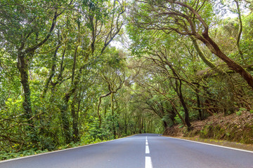 Road through Anaga national park, Tenerife, Spain.