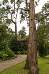 Arbre et Jardin à Opatija