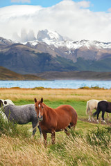 At lake the herd of magnificent horses