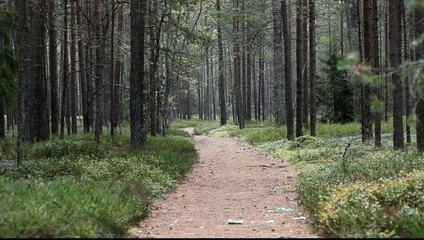 Footpath in forest.