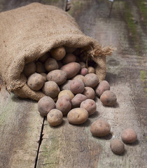 Fresh harvested potatoes spilling out of a burlap bag, on a roug