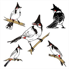 five character of Red-whiskered bulbul birda drawing vector