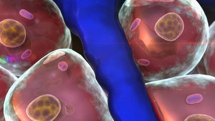 cell, artery