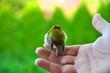 canvas print picture - Dem Vogel die Freiheit schenken