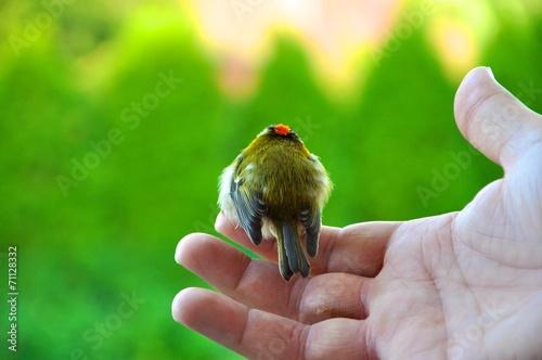 canvas print picture Dem Vogel die Freiheit schenken